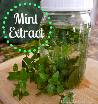mint extract recipe