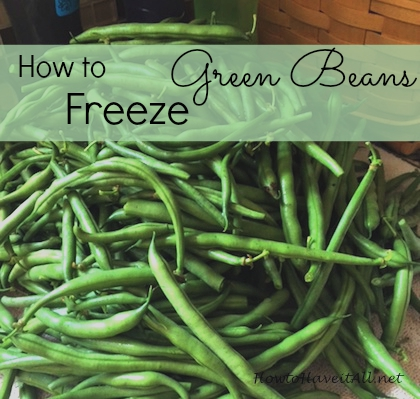 freeze green beans 2